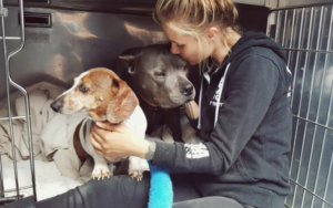 These Bonded Canines Had been Heartlessly Separated After Adoption, However Their Story Isn't Over