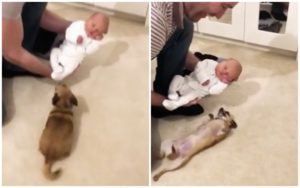 Tiny Canine Has A Shocking Response To Assembly New child Child Brother