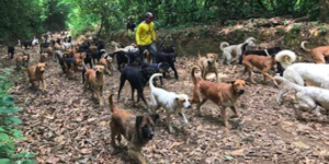 Couple Supplies A Eternally Residence For Over 1,000 Canine