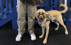 Thanks To Your Purchases, This Veteran Has A Service Canine Who Helps Him Reside A Regular Life