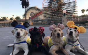 Coaching Service Canine Take An Lovely Area Journey To Disneyland