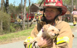 Grieving Firefighter Rescues Pup One Day After Shedding Her Personal Canine