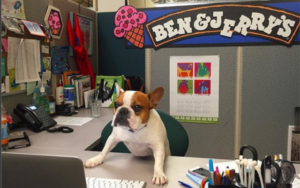 Why Extra Work Locations Ought to Be Canine-Pleasant