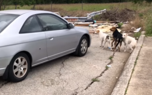 Viral Video Of Canine Dumping Convinces The Wrongdoer To Flip Herself In
