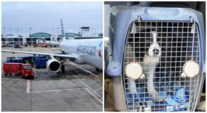 New Certification Course of Goals To Assist Enhance Security Requirements Of Pets On Airways