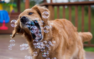 10 Intelligent Canine Enrichment Concepts You Can Simply Do At Residence