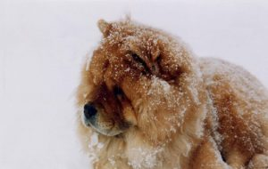 The 20 Most Excessive-Upkeep Canine Breeds