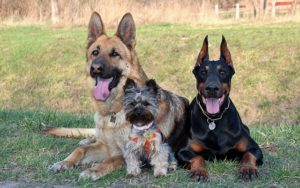 "Kentucky Neighborhood Bans 11 ""Aggressive"" Canine Breeds"