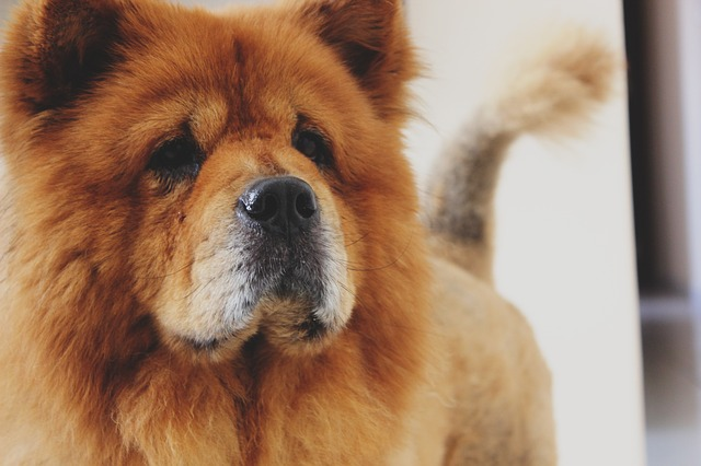 From A Groomer: 3 Reasons Not To Shave Your Double-Coated Dog
