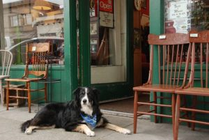 37 Canine-Pleasant Retailer And Restaurant Chains