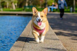 10 Low Upkeep Canine Breeds