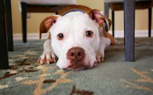 A Room-By-Room Information To Canine-Proofing Your Home