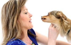 Why Are Some Pups Drawn To Individuals Who Don't Like Canine?