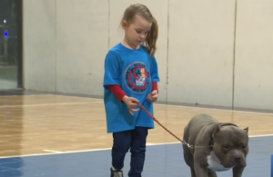 Junior Canine Handlers Work To Debunk Stereotypes About Bully Breeds