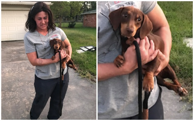 Puppy Trapped In Hoard Gets Rescued, Thanks To Funding From Customers Like You