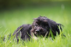 Why Do Canines Eat Grass?