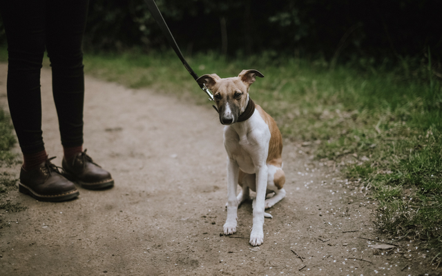 How To Help Your Rescue Dog Feel Safe On Walks