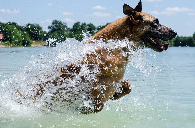 Dogs Have These 5 Major Personality Types