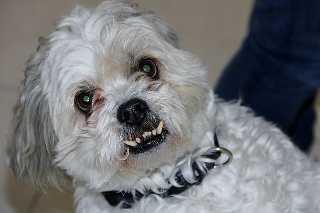 How To Take Care Of Your Senior Dog S Teeth