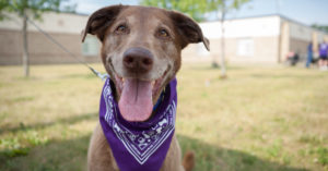 A Information To Creating The Final Bucket Checklist For Your Getting older Senior Canine
