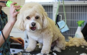 Latest Canine Deaths Spark Invoice To Require Groomer Licensing