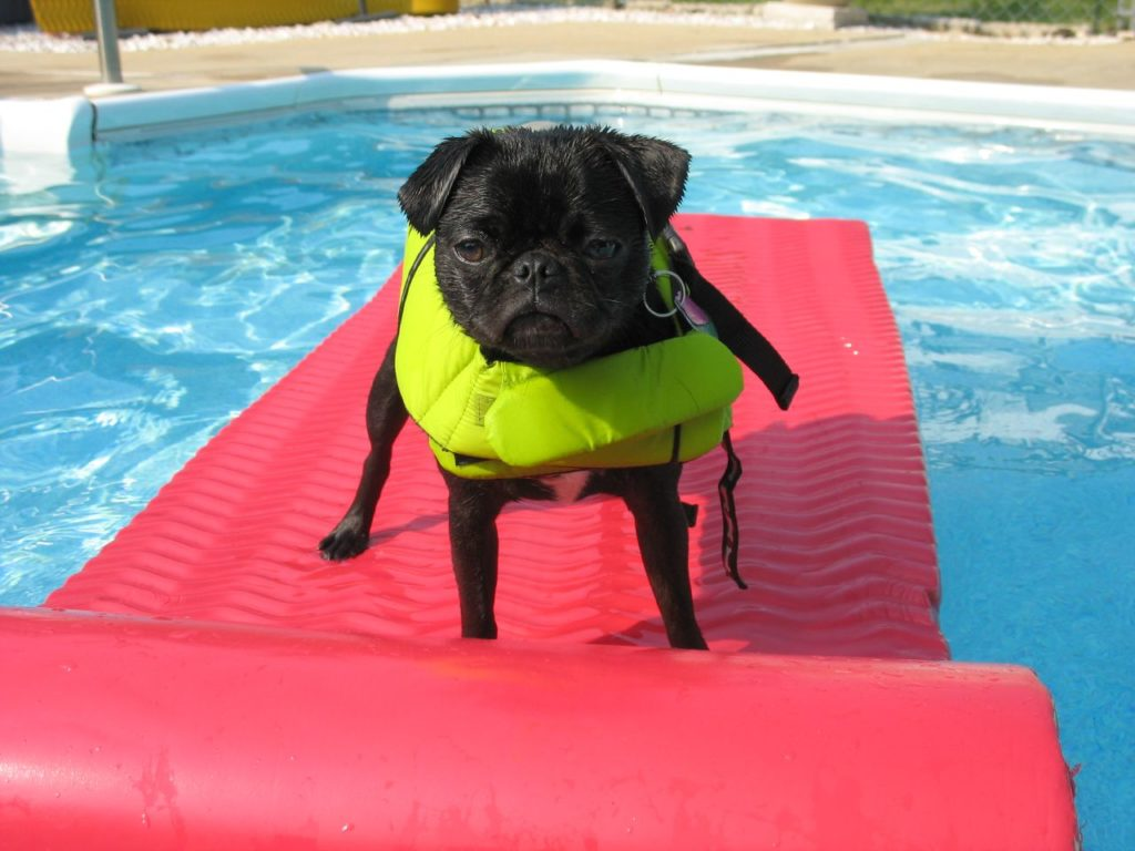 These 13 Dog Breeds Are The Worst Swimmers