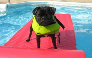 These 12 Canine Breeds Are The Worst Swimmers