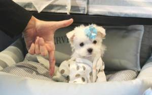 Metropolis Passes Anti-Pet Mill Legislation, However One Infamous Pet Retailer Isn't Comfortable