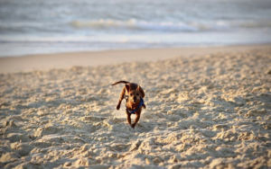 10 Greatest Canine-Pleasant Seashores In The U.S.