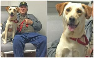 """This Deserving Veteran Was Paired With His """"Greatest Buddy,"""" Thanks To Your Help!"""