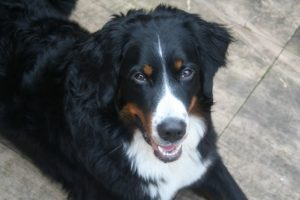 Can My Canine Take A number of Dietary supplements?