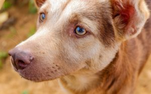 New Examine Reveals That Canines Might Be Higher At Rationalizing Than People