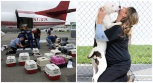 Canine Displaced By Hurricane Harvey Will get Flown To His New Without end Household, Thanks To You