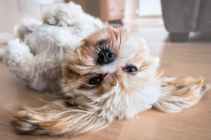 How Digestive Enzymes Can Assist Your Canine's Tummy Troubles