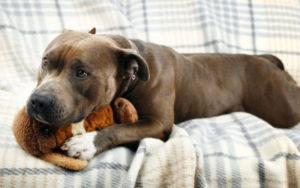 Dozens Of Canine Flu Circumstances Identified In Manhattan & Brooklyn