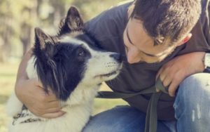 """Can Canines """"Faux"""" Diseases & Accidents For Consideration?"""