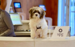 Resort Foster Program Is Getting Shelter Canines Adopted In File Time