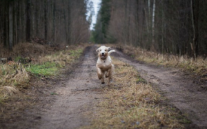 Uncovering The Thriller Of How Some Misplaced Canines Discover Their Manner House