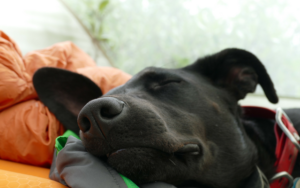 eight Methods To Make Your Rescue Canine As Comfy As Ever