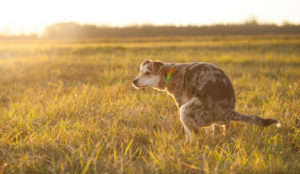 10 Methods A Probiotic Can Assist Your Canine