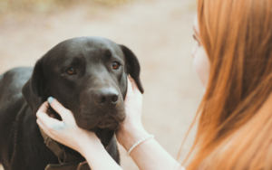 5 Causes To Discuss To Your Canine On A Each day Foundation