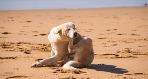 This Small Tweak To Your Canine's Food regimen Can Assist with Summer season Itchiness & Allergy symptoms