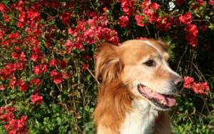 10 Finest Important Oils For Your Canine