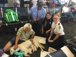 Service Canine Who Gave Delivery In Airport Raises Considerations Amongst Canine Lovers