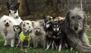 Man Honors Late Canine By Rescuing A Senior Pup… Now He Has A Entire Pack!
