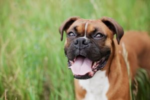 What Your Favourite Canine Breed Says About You