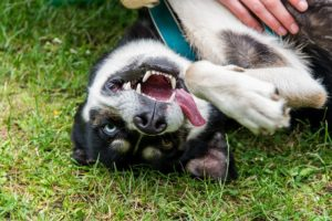 10 Canine Breeds That Can Be Additional Difficult For First-Time Homeowners