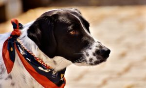 7 Secrets and techniques That Assist Decrease Canine Dander