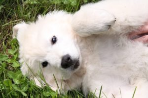 6 Shocking Points A Probiotic Can Assist Your Canine Cope With
