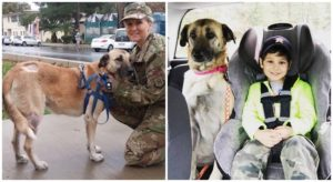 Canine Discovered Almost Lifeless Recovers & Goes Residence With Her Soldier, Thanks To Help From Clients Like You